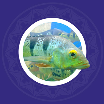 freshwater-fish-photo